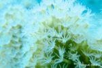 サンゴの撮影