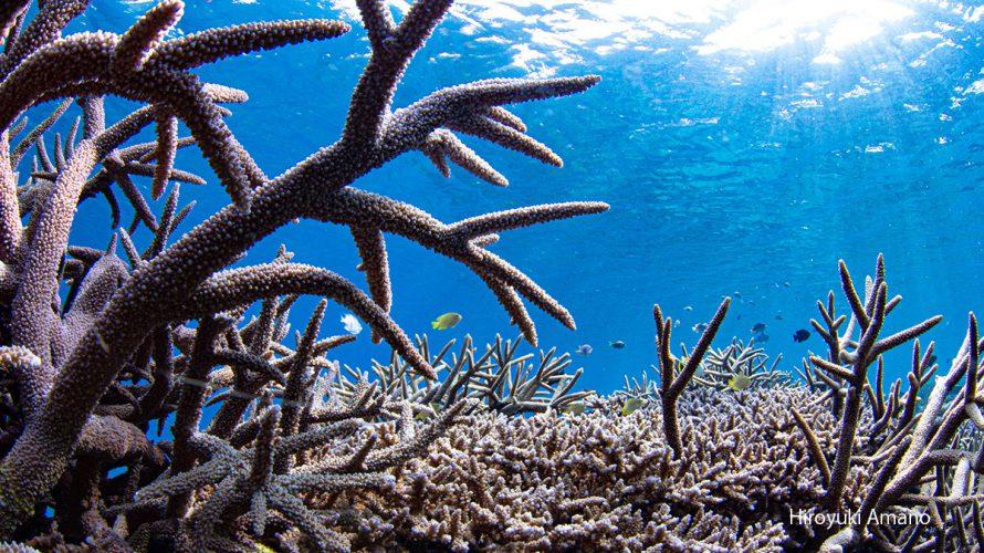 加計呂麻島でサンゴ礁シュノーケリング