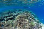 奄美加計呂麻島の海・四季の変化